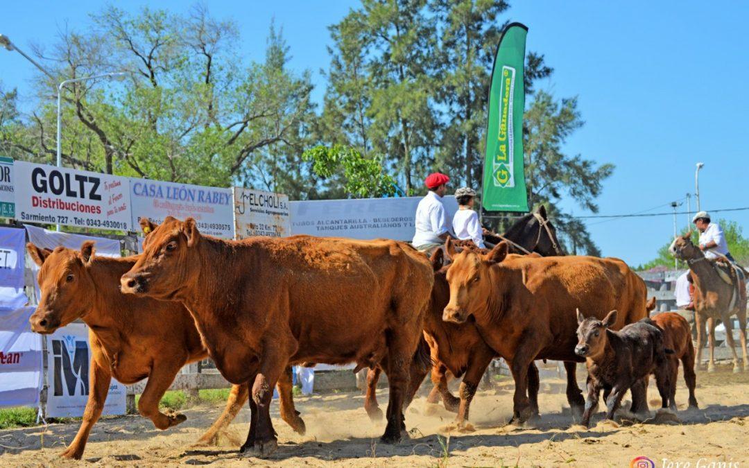 Una vaca Angus Puro Controlado con cría logró un récord nacional para la categoría
