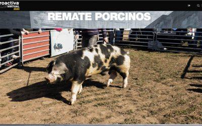 Se pagaron 173.000 pesos por un reproductor porcino en el remate de AgroActiva Virtual