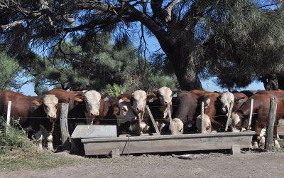 El desafío de producir carne de calidad con inocuidad y sustentabilidad