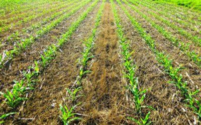 Cobran impulso las siembras de soja, maíz y girasol