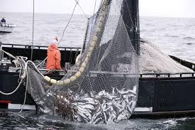 El consumo de pescado por habitante cayó 11% respecto de 2019