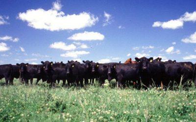 Más capacitación virtual: monitoreo del pastoreo