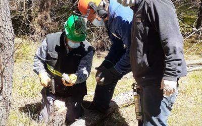 Se contribuye a la conservación de la sanidad forestal en municipios de la costa bonaerense