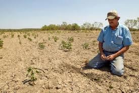 Cambio Climático y tiempos extremos: sequías e impacto en el sector agropecuario argentino (Nota N°1)