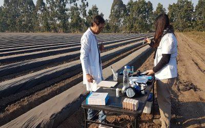 Implementan un sistema de monitoreo de plagas en cultivos hortícolas