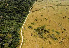 Liberación de carbono del suelo por calentamiento global
