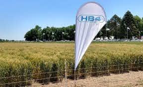 Posición pública de Aapresid en referencia al evento HB4 en trigo