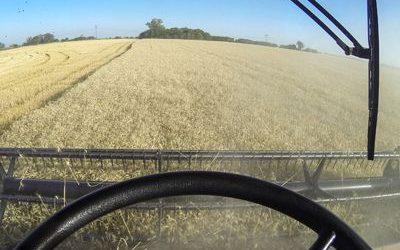 Tras cosechar el 40% del trigo, confirman menores rindes en la región núcleo