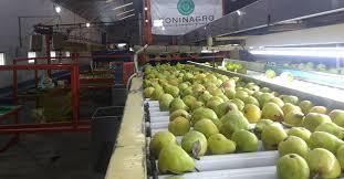 Las exportaciones de frutas frescas crecieron un 6 por ciento en relación al 2019