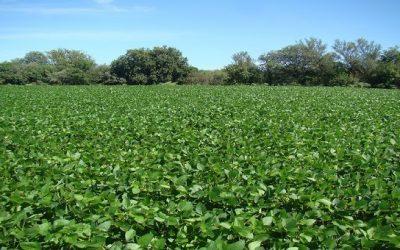 Vinculan el cambio de uso de suelo a pérdidas de carbono orgánico