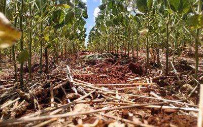 Se espera una cosecha agrícola de 129,1 millones de toneladas