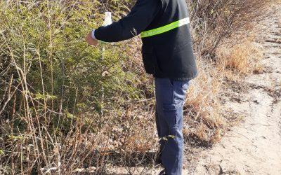 Monitoreo en la red de trampas para la plaga picudo del algodonero en la provincia de Chaco