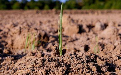 Biodiversidad del suelo: base para la producción sostenible