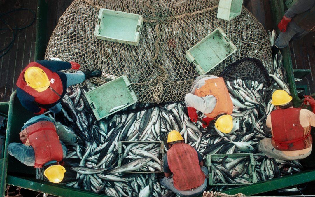 Agricultura fortalece el sistema de capturas y exportaciones en el sector pesquero