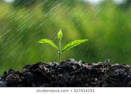 Precipitaciones y vigorosa entrada de vientos del sur