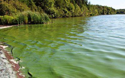 Proliferación de algas: monitorean lagos y lagunas de Argentina y el mundo