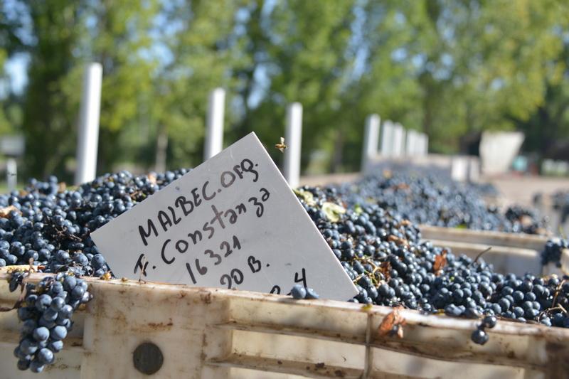 El INV y el SENASA acordaron integrar las exigencias requeridas para el transporte de uva con destino de elaboración