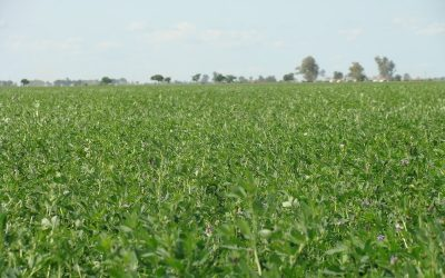 Las semillas templadas argentinas buscan competir en el mercado internacional