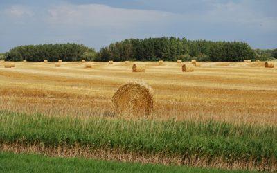 Agricultura creó el Plan Estratégico del sector de la Producción Orgánica