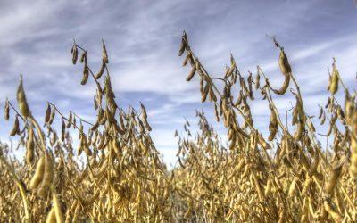 Los futuros alcanzan los límites debido a que el USDA no ofrece un aumento de la siembra de maíz y soja