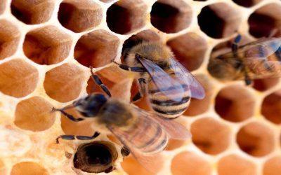 Crecieron un 48% las exportaciones apícolas