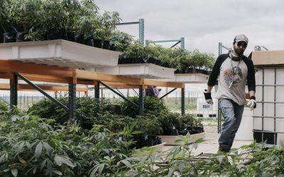 Los legisladores de Nueva York acordaron legalizar el uso recreativo de la marihuana