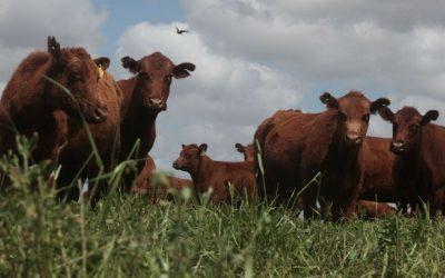 Carne: dan de baja a casi 100 establecimientos de exportación para la cuota Hilton