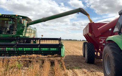 Servicios de cosecha para la gruesa suben más del 50%