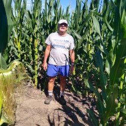 Se agrava la condición de los cultivos tardíos y de segunda en pleno período crítico