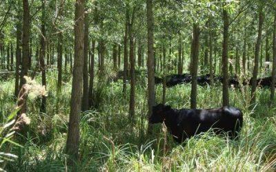 Sistema silvo-apícola-pastoril: destacan que es una alternativa en la zona de islas