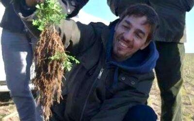 Esclarecen el rol de las raíces en la salud de suelos y ecosistemas