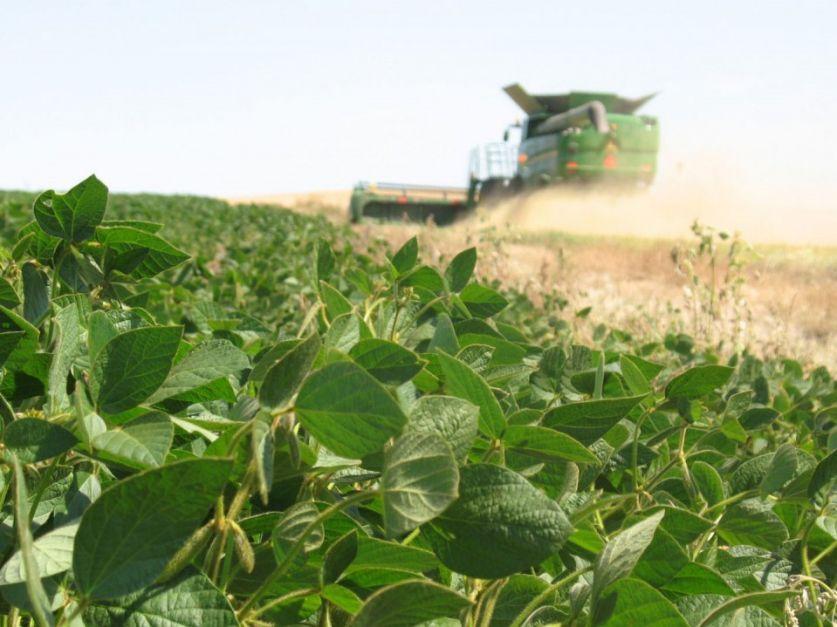 Recortan estimación de cosecha de soja a 43 millones de toneladas