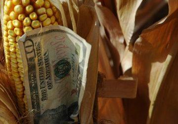Los futuros del maíz suben en las operasciones nocturnas; la producción semanal de etanol aumenta.