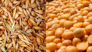 Trigo/soja: una lección de agronomía