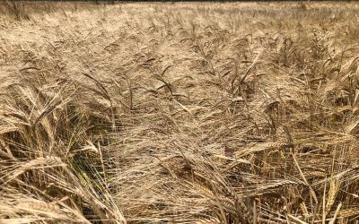 La agroecología es una opción competitiva y sostenible