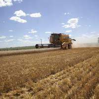 Finalizó la siembra de granos finos marcando un nuevo récord histórico