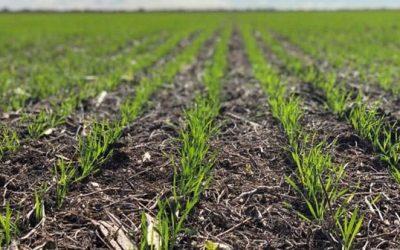 Tras las precipitaciones, mejora la condición de la fina sobre el centro y sur del área agrícola