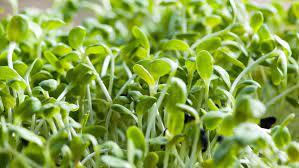 Se afirman posibilidades para la alfalfa y el heno de calidad