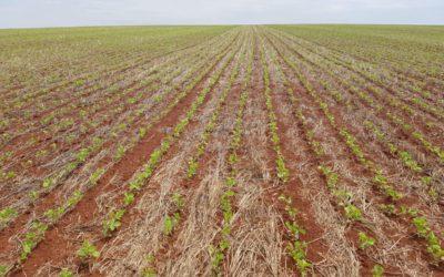 El área de soja caería a su nivel más bajo de los últimos 15 años