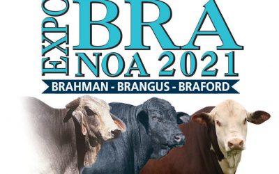 En Expobra se dio el esperado reencuentro de la ganadería