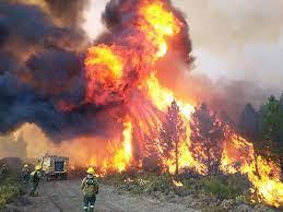 La AFIP otorga medidas de alivio para zonas afectadas por incendios forestales en la Patagonia