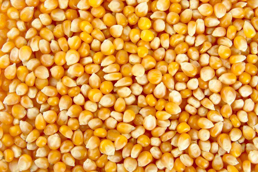 Repuntó el valor de la soja en Chicago,tras un informe del USDA sin sorpresas