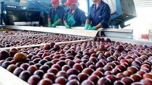 Fijan valores de referencia para evitar delitos con las exportaciones de ciruelas