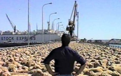 La Argentina apunta a concretar su primera gran exportación de ganado en pie en mucho tiempo: Serían unos 30.000 ovinos para Arabia Saudita