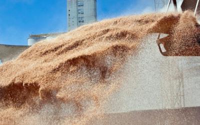 ¿Se viene la recuperación en el precio de la soja y el maíz?