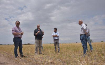 """Solmi afirmó que existen """"muy buenas expectativas con la presente campaña de trigo"""""""