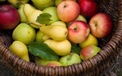 Argentina proyecta que disminuirá comercialización de peras y manzanas durante 2021