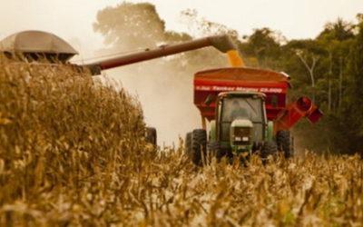 Inquietud en el campo: teme que el Gobierno vuelva a intervenir el mercado de maíz