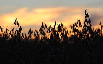 La suba de los aceites vegetales y el petróleo impulsa a la soja y el maíz